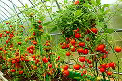 Агромакс позволяет собирать в два раза больше урожая