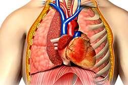 Гистанол Нео восстанавливает сердечную мышцу