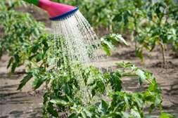 Удобрение Агротенс отличается простотой использования.